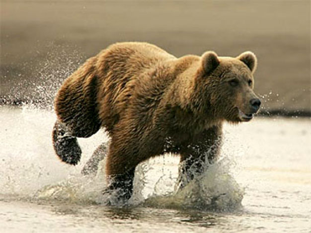 Bears of the World | American Bear Association
